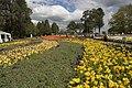 Parkes ACT 2600, Australia - panoramio (8).jpg