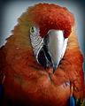 Parrot (8307577249).jpg