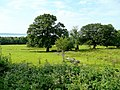 Pastoral view near Crymlyn - geograph.org.uk - 1379874.jpg