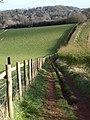 Path, Cockington - geograph.org.uk - 751963.jpg