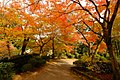 Path Under Autumn Leaves (236898707).jpeg