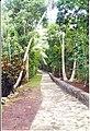 Path to bure ^1 - panoramio.jpg