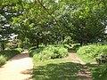 Paths, Richmond Park - geograph.org.uk - 1921701.jpg