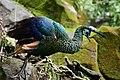 Peacock green.jpg
