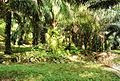 Perkebunan kelapa sawit milik rakyat (56).JPG