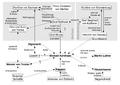 Personendiagramm Michael Kohlhaas (Kleist).png