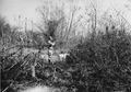 Photograph of Quail Hunting - NARA - 2128261.tif