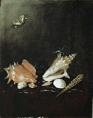 Still Life with Shells and Insects