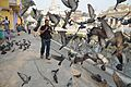 Pigeons Surrounded Photographer - Sheetalnath Temple and Garden Complex - Kolkata 2014-02-23 9523.JPG