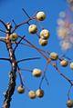 PikiWiki Israel 17206 Plants of Israel.jpg