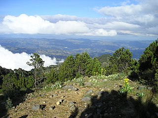 Central American montane forests Ecoregion (WWF)