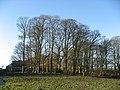 Plantation around the barns at Carraw - geograph.org.uk - 1099609.jpg