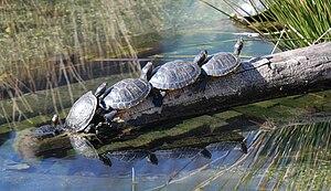 Sharing - Reptiles sharing space