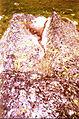 Popovo lake Pirin BG.jpg