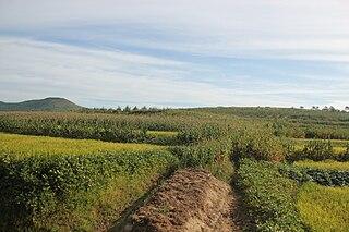 Potato production in North Korea production of potato in North Korea