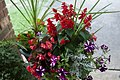 Potted Plant - 50088180356.jpg