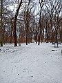 Praha, Petřiny, Obora Hvězda v zimě.jpg