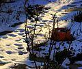 Prints in the snow (4238583834).jpg