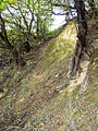 Prosecke skaly dreviny.jpg
