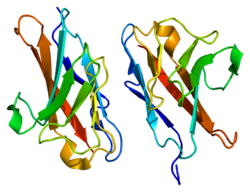 Protein CEACAM1 PDB 2gk2.png