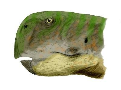 Psittacosaurus meileyingensis BW