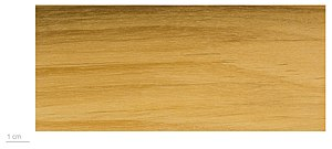 Pterocarpus - Wood of Pterocarpus officinalis.