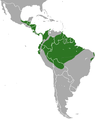 Pygmy Anteater area.png