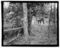 Quintana Thermal Baths, East side of Highway 503, Guaraguao, Ponce Municipio, PR HABS PR-137-20.tif