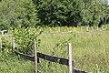 Réserve naturelle Marais Lavours Aignoz Ceyzérieu 51.jpg