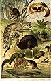 Révai nagy lexikona; az ismeretek enciklopédiája (1911) (14597897290).jpg