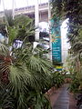 RBGE Palm House interior 03.jpg
