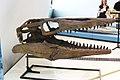 ROM 47 - Ictiosaurio (14173104217).jpg