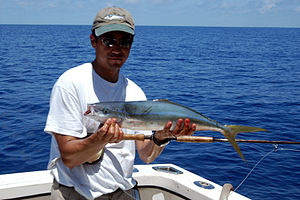 Rainbow runner - Rainbow runner taken on a saltwater fly, Bermuda
