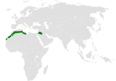 Ramphocoris clotbey distribution map.png