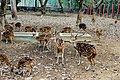 Ramsagar-National-Park.jpg