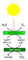 Reacciones de la fotosíntesis.PNG