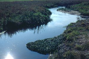 Rodgau - The Rodau on Weiskirchen's outskirts