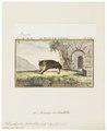 Rhinolophus bihastatus - 1700-1880 - Print - Iconographia Zoologica - Special Collections University of Amsterdam - UBA01 IZ20700147.tif