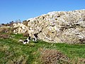 Rhyolite Outcrop, near Afon Gyrach - geograph.org.uk - 242567.jpg