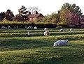 Ridge and furrow, Broadwell (1) - geograph.org.uk - 1275752.jpg