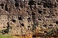 Riparia riparia (28975991951).jpg