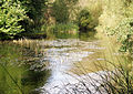 River Itchen - geograph.org.uk - 1023235.jpg