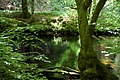 River Teign - geograph.org.uk - 411255.jpg