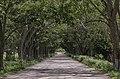 Road To Balancan.jpg