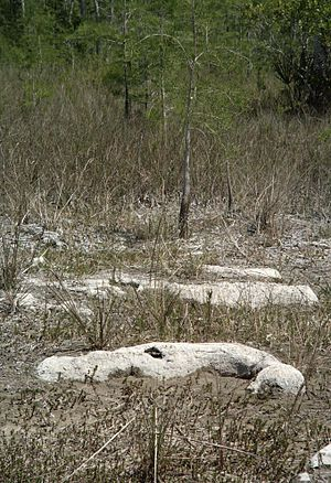 Big Cypress National Preserve - Rock outcroppings in the prairie north of Concho Billy Trail
