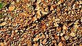 Rocky vineyard soil terroir-la-peira.jpg