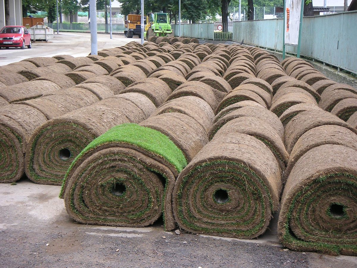Sod Grass On Sale Kitchener On