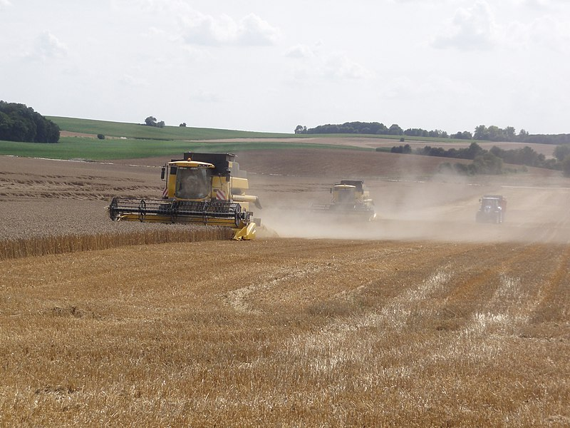 Ronssoy (Somme) harvesting