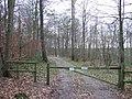Rook Wood - geograph.org.uk - 304364.jpg