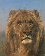 Portrait of a Lion - Prado